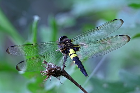closeup of a dragonfly on a grass photo