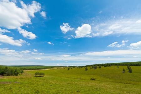 closeup of grassland landscape in chengde SaiHanBa, in China Banco de Imagens