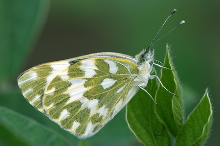 features: closeup of butterfly features