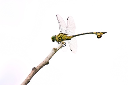closeup of resting dragonfly on the tree branch photo