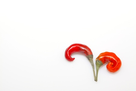 two red peppers in the white background photo