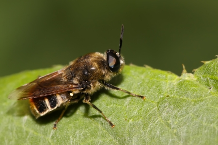 popular science: bee insects