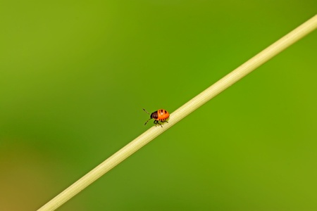 beneficial insect: a stinkbug on the green plant Stock Photo