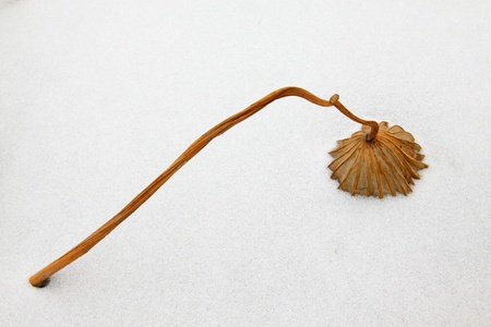 lotus leaf: dry lotus leaf in the snow in the wild Stock Photo