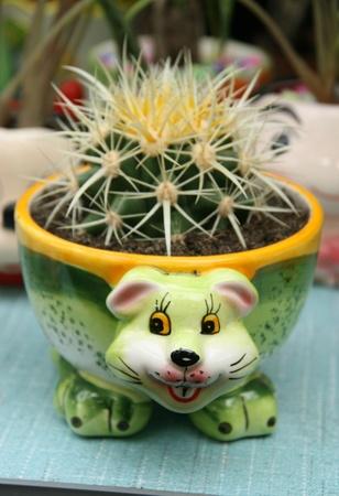 flowerpots: Beautiful cartoons Flowerpots in a Flower market, china. Stock Photo