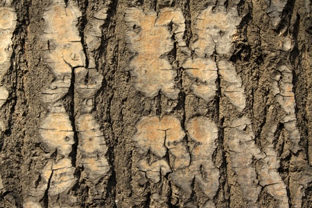 closeup of dry tree bark, can used as background photo