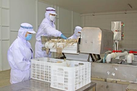 linea de produccion: 28 de octubre de 2011 Los trabajadores de la l�nea de producci�n de procesamiento de alimentos en una f�brica, el norte de china Editorial