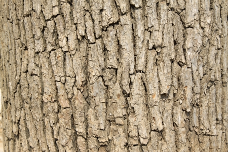 closeup of dry tree bark photo
