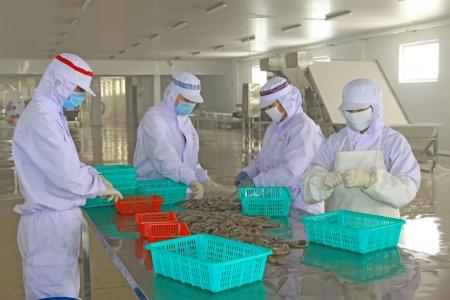 linea de produccion: 28 de octubre de 2011 Los trabajadores de la l�nea de producci�n de procesamiento de alimentos en una f�brica, el norte de china Foto de archivo