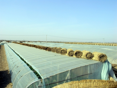 appearance: Vegetable greenhouses architectural appearance in rural areas, china