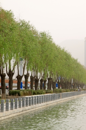 greening: greening tree in the river in a park, north china