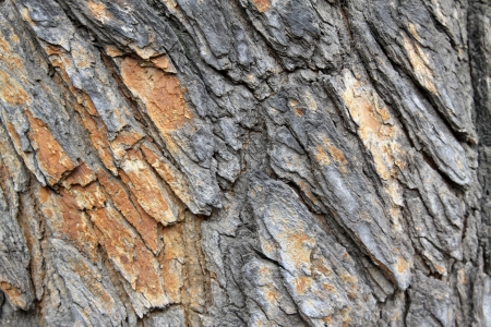 closeup of scholartree bark in china, looks very old Stock Photo - 18192298
