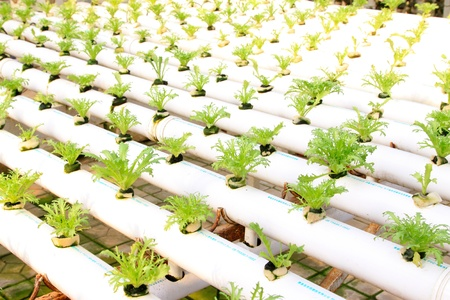 soilless cultivation of vegetables, in a hightech plantation, north china Stock Photo - 18895848