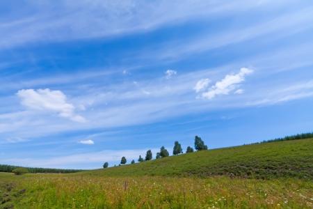 hebei: beautiful grassland landscape in summer, Chengde, Hebei Province, north china
