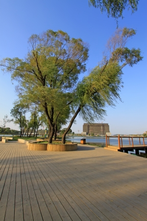 wooden floor and green trees in a park, north china Stock Photo - 19718613