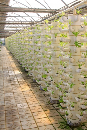 pollution free: stereo planting vegetables in a modern farm, north china