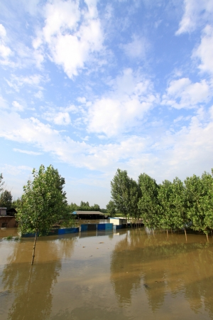 Workshop and trees in the flood, Luannan, Hebei, China   Stock Photo - 20083101