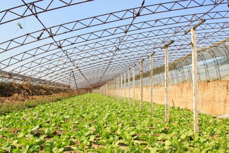 vegetable greenhouse interior landscape in rural areas, north china Stock Photo - 20252547