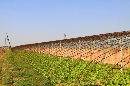 feature films: vegetable greenhouse interior landscape in rural areas, north china Stock Photo