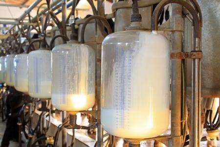 mleko: mleko szklany zbiornik magazynowania w warsztacie dojenia, Luannan County, Chiny