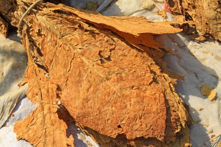semi finished goods: closeup of photo, dry tobacco leaves in the market, north china