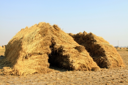 piles of straw on a farm in the wild photo