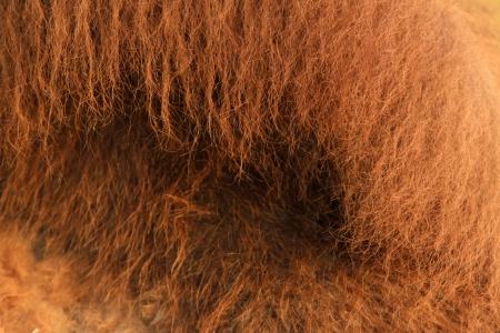 closeup of Camel Stock Photo - 20314042