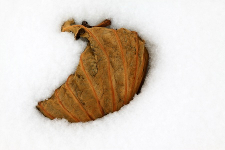 withered lotus stalk in the snow, in winter Stock Photo - 20746550