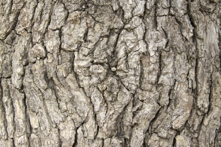 closeup of bark texture, natural ecological picture Stock Photo - 21004337