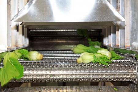 Gemüse in der automatischen Reinigungsanlagen, in einem Gemüse-Produktionslinie Standard-Bild - 21252979