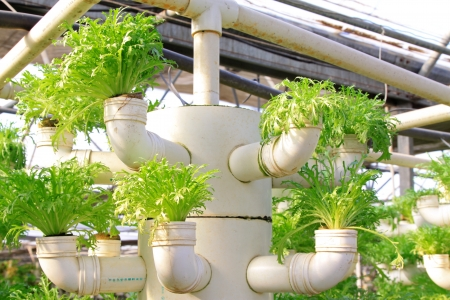 soilless cultivation: Lettuce soilless cultivation of three dimensional pipeline, Qinhuangdao, China