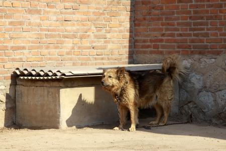 dog under high wall Reklamní fotografie - 28600451