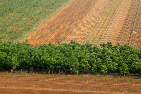 arable land: Trees and arable land, closeup of photo