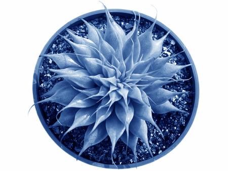 charnu: gros plan des plantes ornementales charnues.