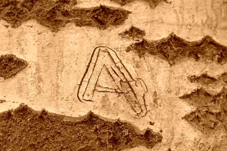 古いポプラ ユスラウメ木の樹皮のクローズ アップ