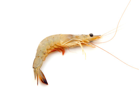 aquatic products: Fresh prawns in a white background, closeup of photo