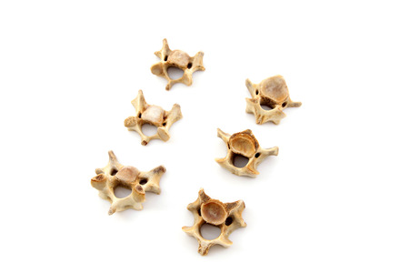 cancellous: Bones in a white background, closeup of photo