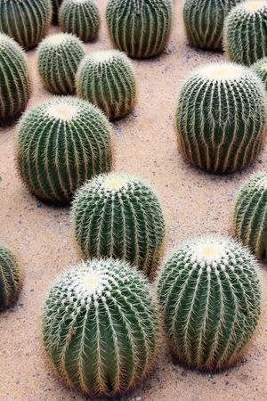 plantas del desierto: Las plantas del desierto, foto del primer Foto de archivo