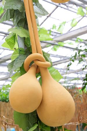 dried gourd: deformation gourd, closeup of photo