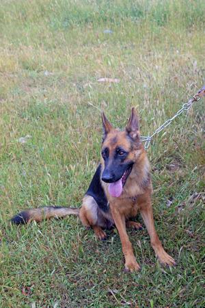 constraints: pet dog on the grass, closeup photo