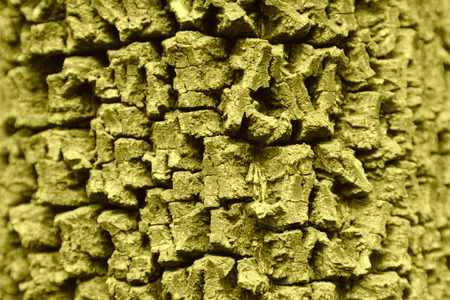 vicissitudes of the tree bark texture in a park photo