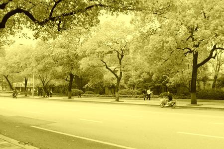 greening: greening tree in the street, south China