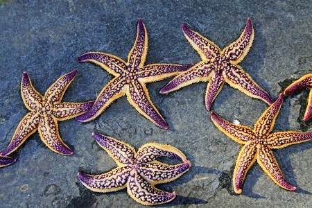 aquatic products: Starfish on the ground, closeup of photo