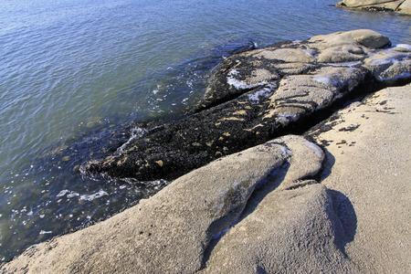 rare rocks: mussels on rocks, closeup of photo