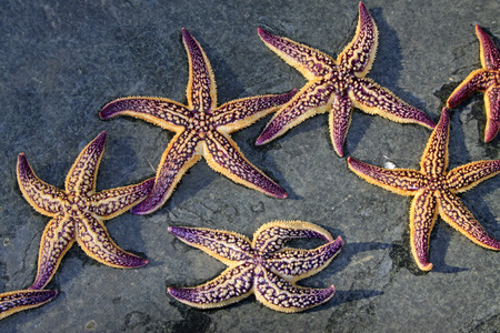 aquatic products: Starfish on the ground, closeup of photo