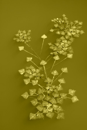 duckweed: duckweed on water surface in the wild
