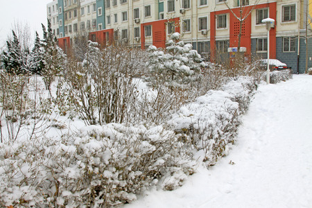 areas: Plants in the snow, at residential areas, closeup of photo Stock Photo