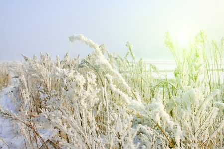 dazzle: grass in the wind and snow, closeup of photo Stock Photo