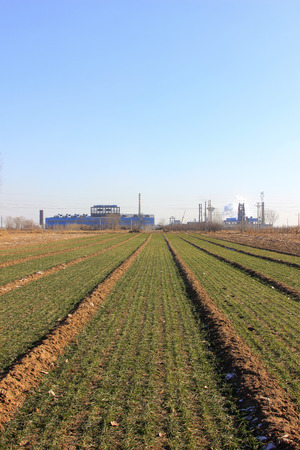 winter wheat: Winter wheat fields and factories Stock Photo