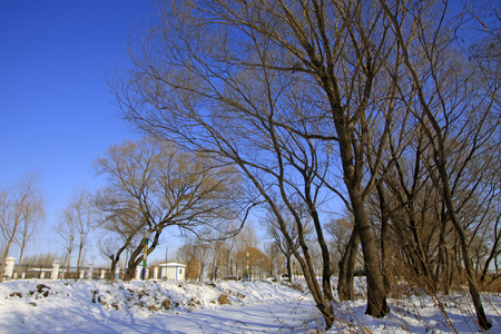 wider: natural scenery, trees in the snow, closeup of photo